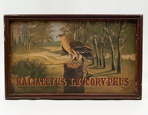 Antique American Folk Art Painting on Board of Eagle on Perch Pennsylvania Origin